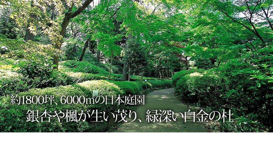 銀杏や楓が生い茂り、緑深い白金の杜